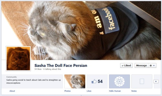 The New Facebook Pages Design